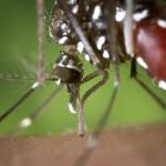 Qu'est-ce que le paludisme?