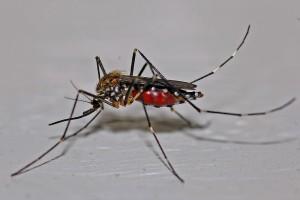 Le moustique est la principale cause du paludisme